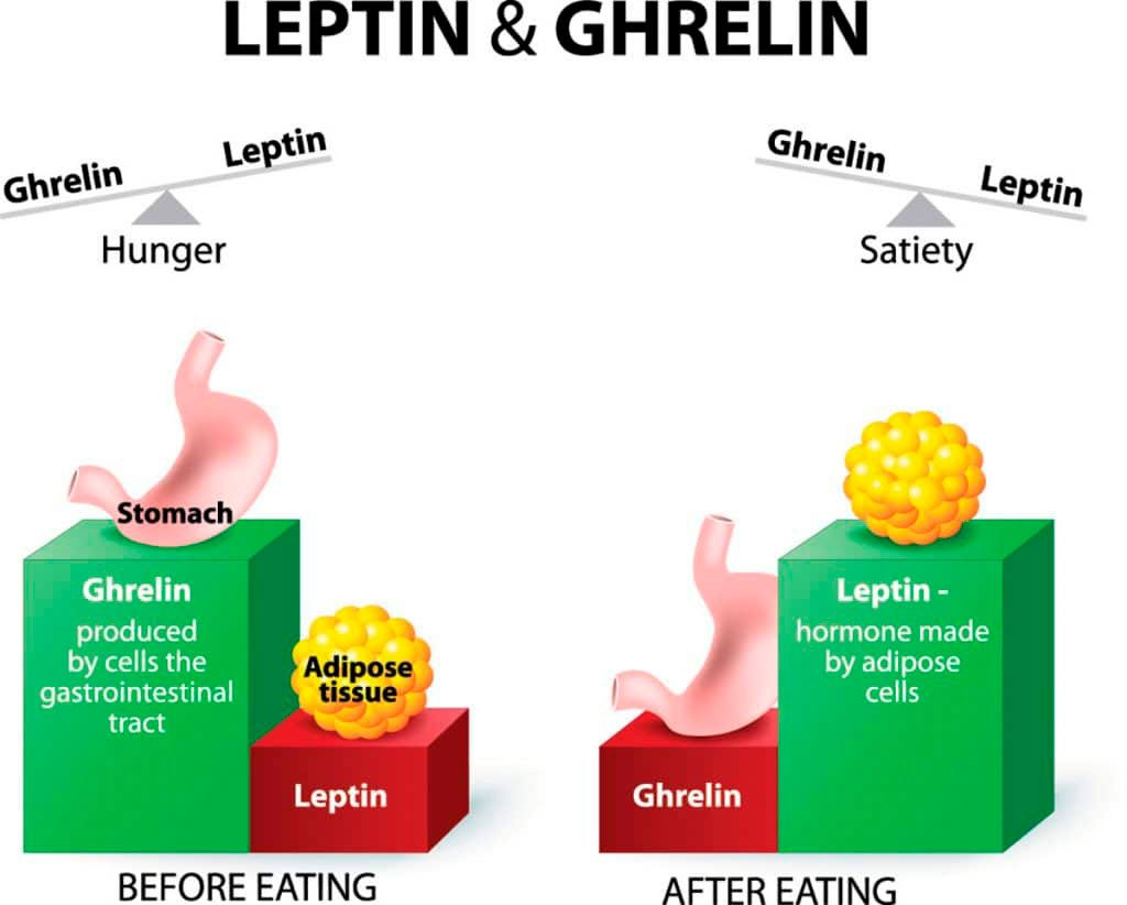 leptin-and-ghrelin